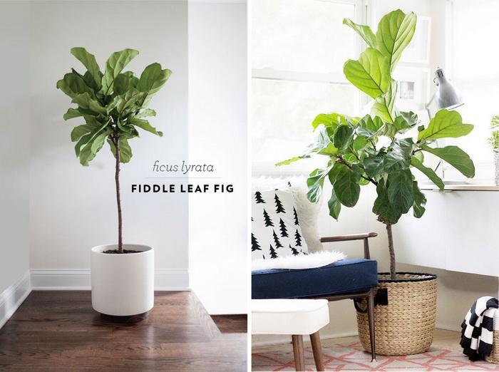 办公室绿植摆放_【合集】盘点12种常见的高格调家居绿植 - 知乎