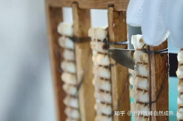 巢蜂蜜里有皇家果冻吗?蜂窝蜂蜜和皇家果冻之间有什么区别?