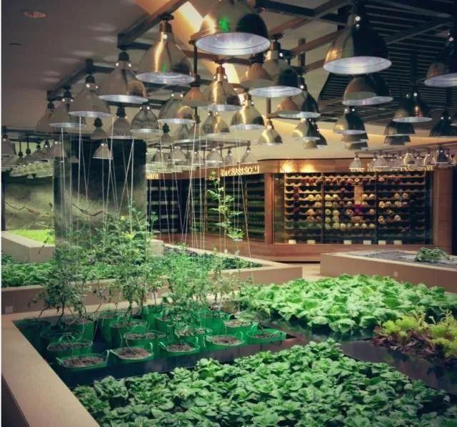 开心农场2_共享农田:中国人那么爱种菜,在城里也种种呗? - 知乎