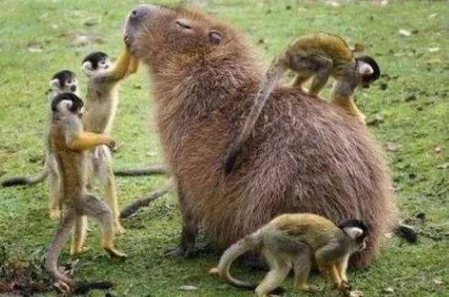 如果有一种动物的粪便非常好吃,人类会不会有一些大胆的想法?