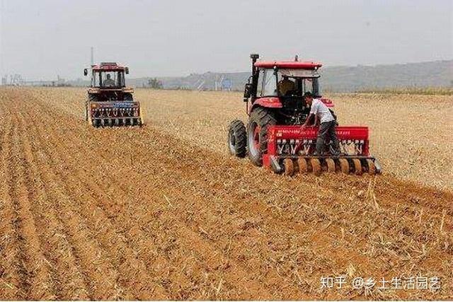 播种小麦,每亩多少种子合适?了解这些因素后,您就明白