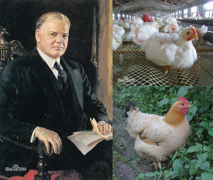 鸡年说鸡:科学家让你更懂鸡汤