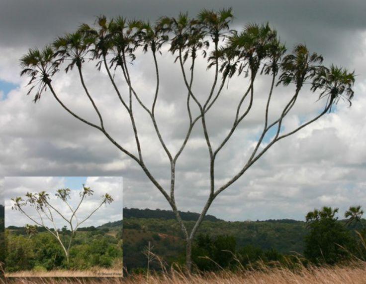 10584 二叉树怎样序列化才能重建