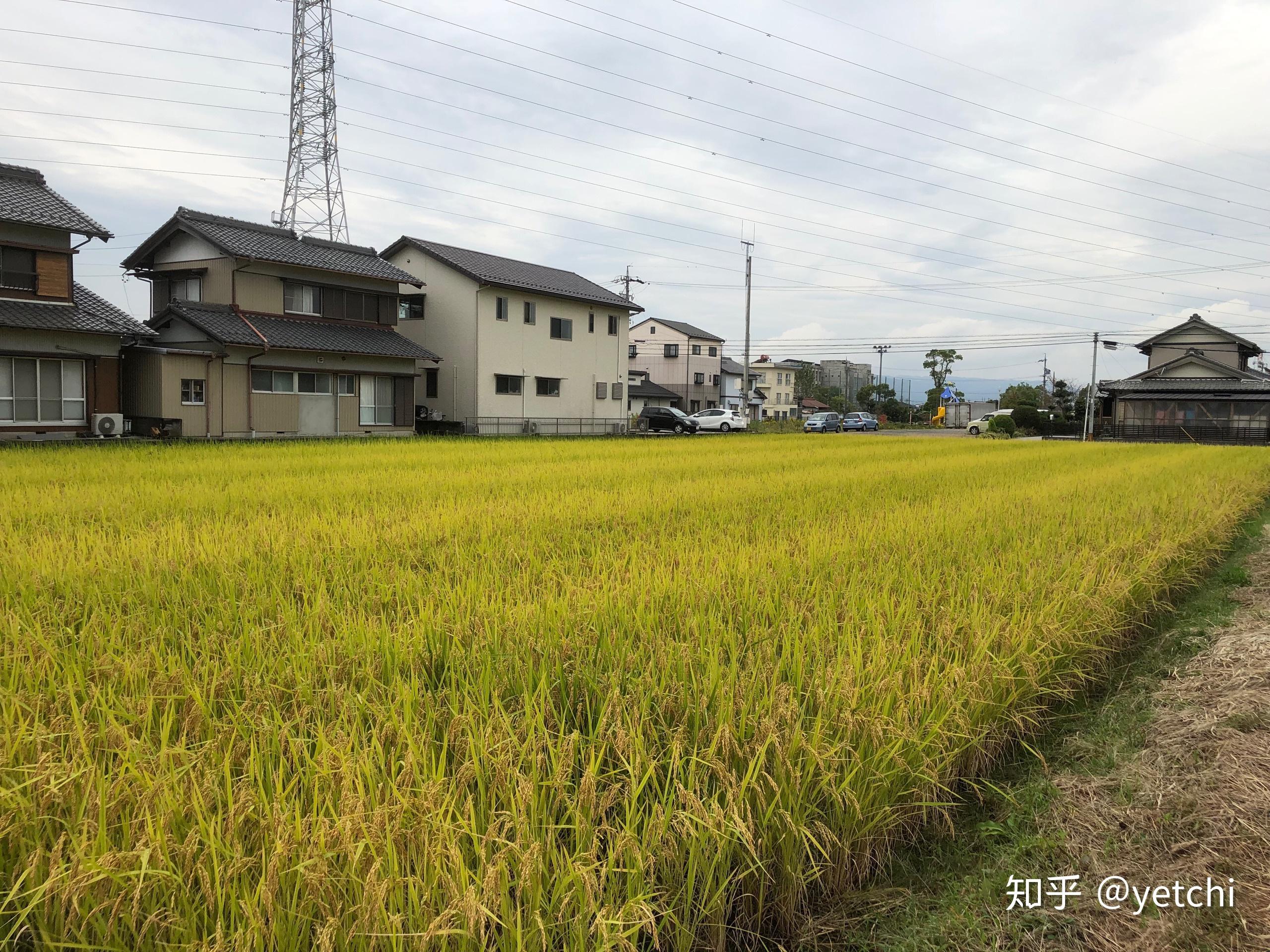 去日本旅游要签证吗_日本真的除了东京以外都是农村吗? - 知乎