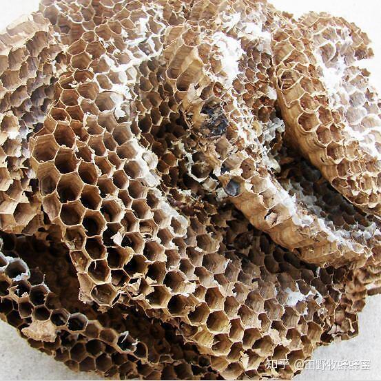 黄色巢是如何形成的?是蜂蜜吗?