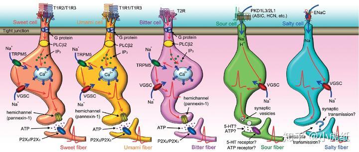 DNA 和 RNA 是什么味道的?