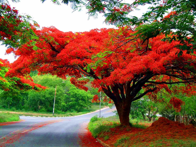 优酷网_(园林造景)景观植物的应用——乔木的力量 - 知乎