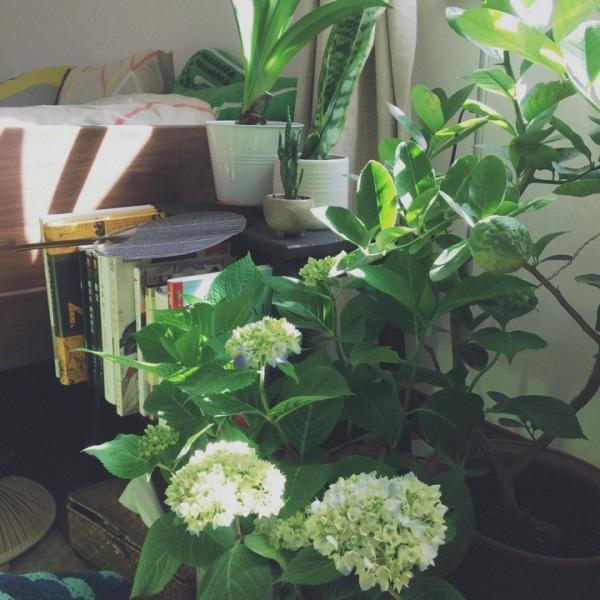绿植温暖生活,宅女如何把家打造成最舒服的地方