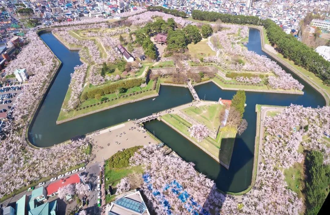 去日本看樱花,只能选在三月和四月?| 微爱订制旅行