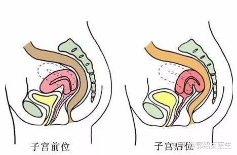 子宮口 位置 生理中