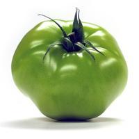 绿番茄责任田