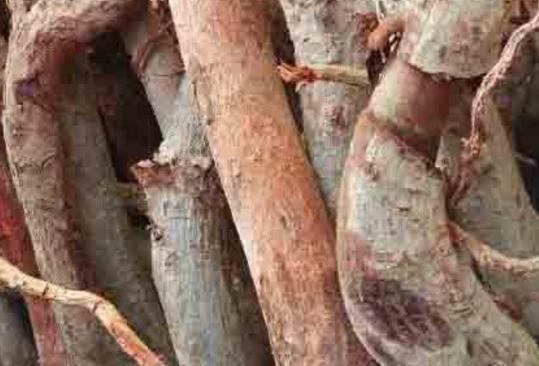 世界上最老的人参图_植物V哥大发现,世界上最有效的十二种补肾植物 - 知乎