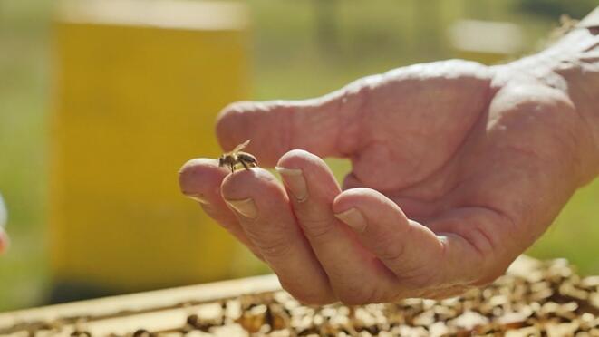 如果蜂蜜蜜蜂在發紅之后悲傷,我該怎么辦?受傷后我該怎么辦?