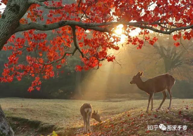 """8b75164017 因为是初春,还没到红叶季节,所以我索性选了中等长度的大圣院路线。据说高仓天皇(平清盛女婿)来严岛时就曾在大圣院后面的山上欣赏""""白丝瀑布""""。"""
