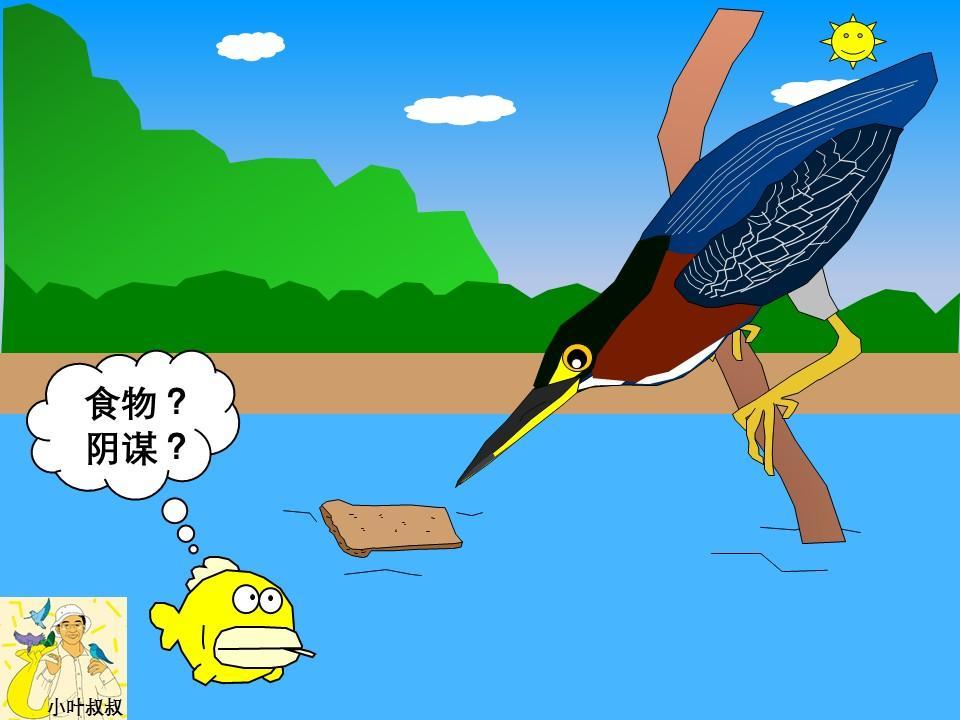 钓鱼可不是人类的专属,让我们数一数那些会钓鱼的鸟儿