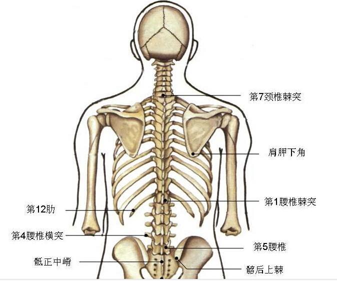 横 突起 腰椎 「腰椎横突起骨折」に関するQ&A