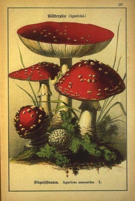 """玉的魂魄 - 4:通天彻地的神物(上)— """"迷幻蘑菇""""与中国青铜酒器上的谜团"""