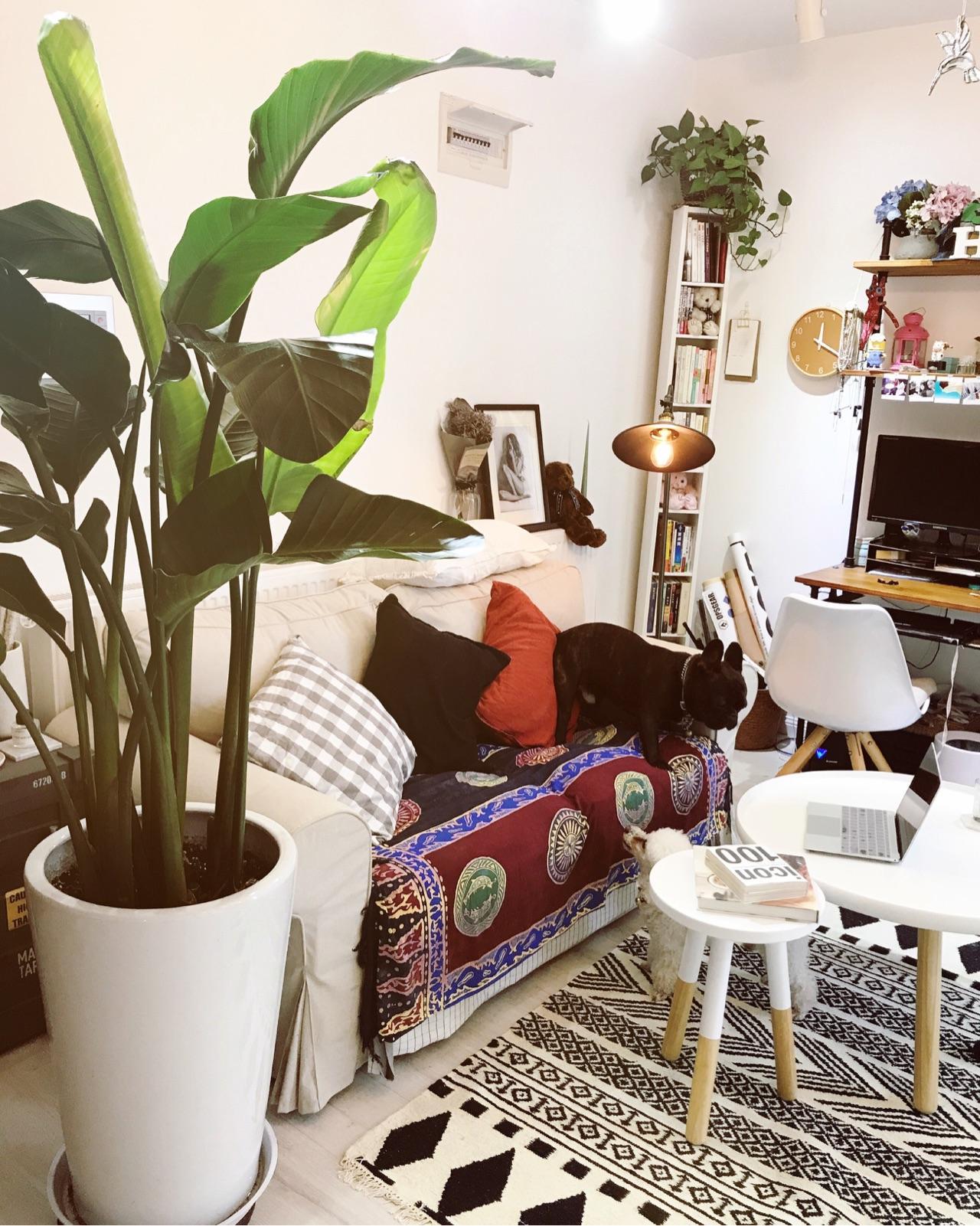 宜家沙发_怎样把家布置得温馨? - 知乎