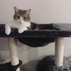 Jackie.Meowww
