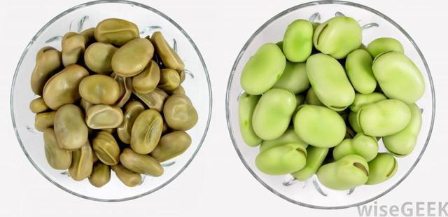 蚕豆病的症状有哪些图片