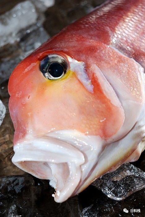 白方头鱼_甘鲷   德川家康钦点白身鱼其实是个表情帝 - 知乎