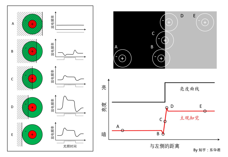 解密视错觉 | 马赫带和亮度对比错觉