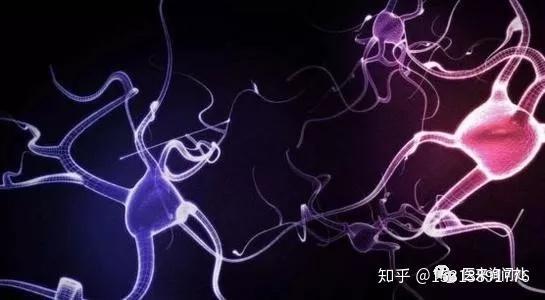 植物性神经紊乱食疗_如何鉴别诊断植物神经功能紊乱的出现? - 知乎