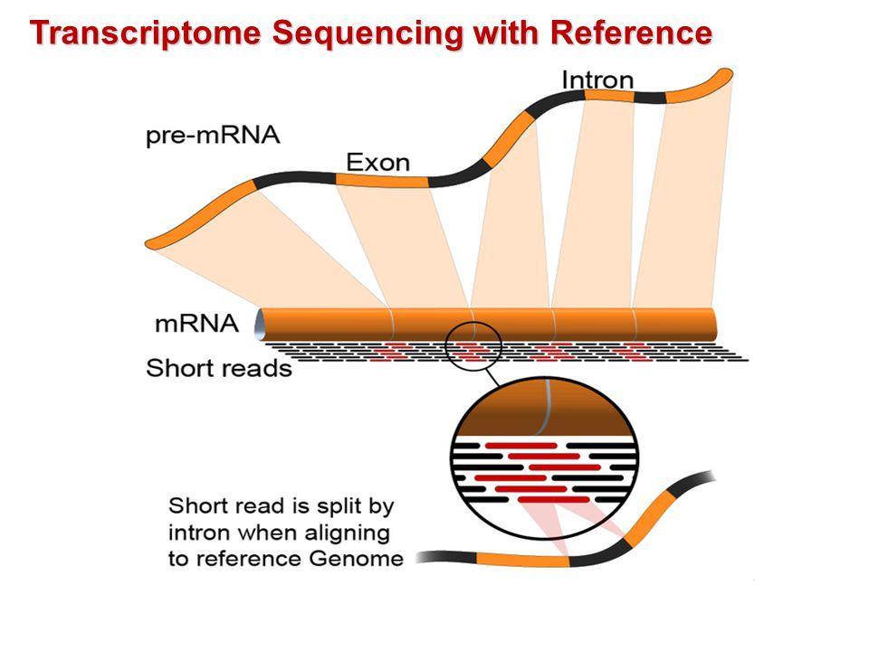 RNA-seq中的那些统计学问题(二)FPKM/RPKM之外的那些标准化方法