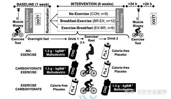 吃了饭再减肥锻炼
