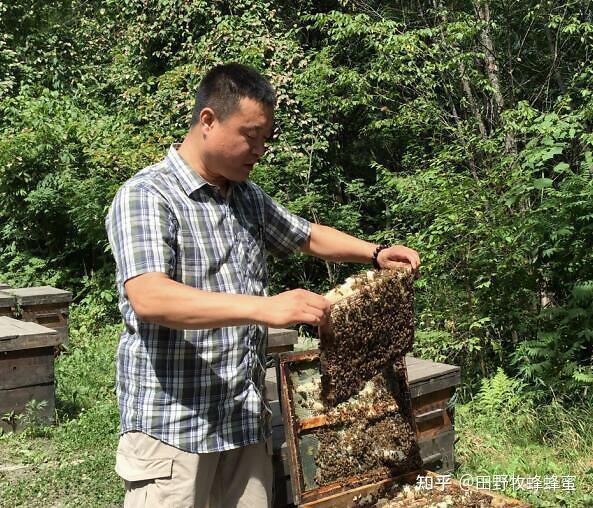 桉树蜂蜜的作用和效果,桉树的益处是什么?
