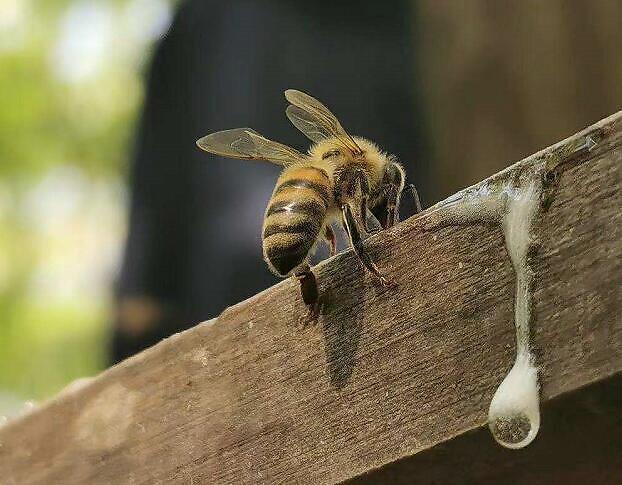 正確的方式喝蜂蜜水?如何喝蜂蜜是正確的?